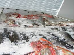 Fresh Seafood – Price reduced !!!!!